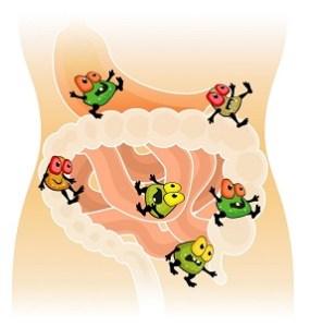 """Lactobacilos: los Beneficios de las Bacterias """"Buenas"""""""