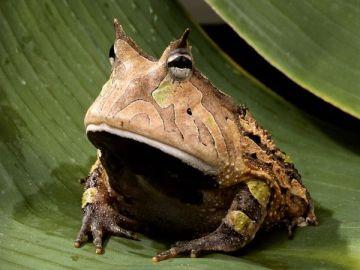 frog Saluki Marooned