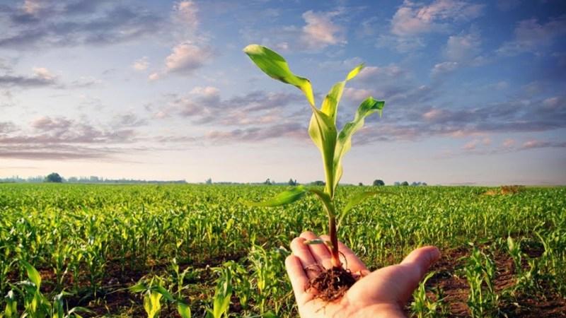 Nominata la Commissione Consultiva Comunale per l'Agricoltura e le Foreste