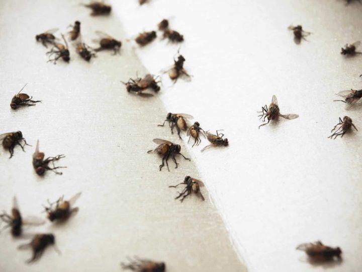 Con i primi caldi sono ritornate le mosche e le zanzare