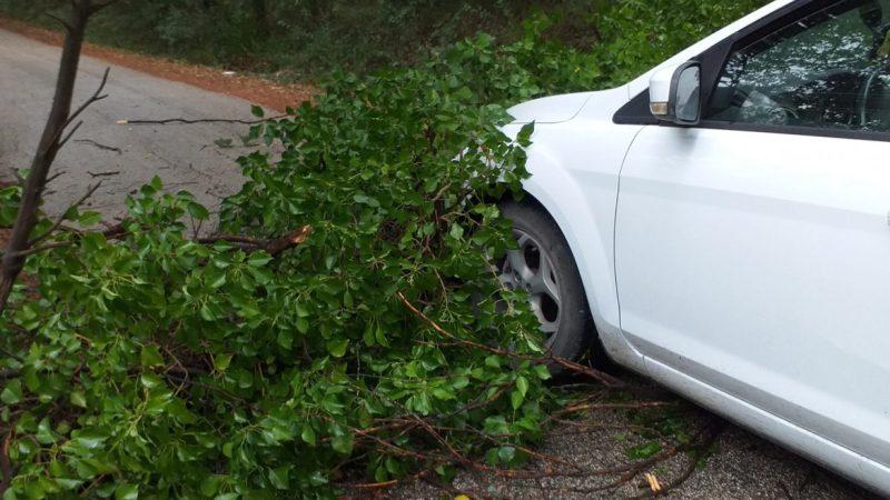 Albero ostruisce il transito sulla S.P. Salussola – Brianco, causa il temporale odierno