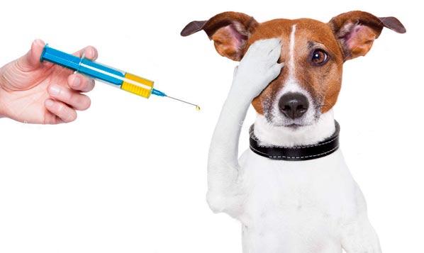 https://i2.wp.com/www.saluteanimale.com.br/wp-content/uploads/2018/08/especial_vacina.jpg?w=891