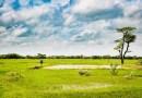 #SALUTEEAMBIENTE – ELEVATI LIVELLI DI CO2 RIDUCONO LA QUANTITÁ DI NUTRIENTI NEL RISO