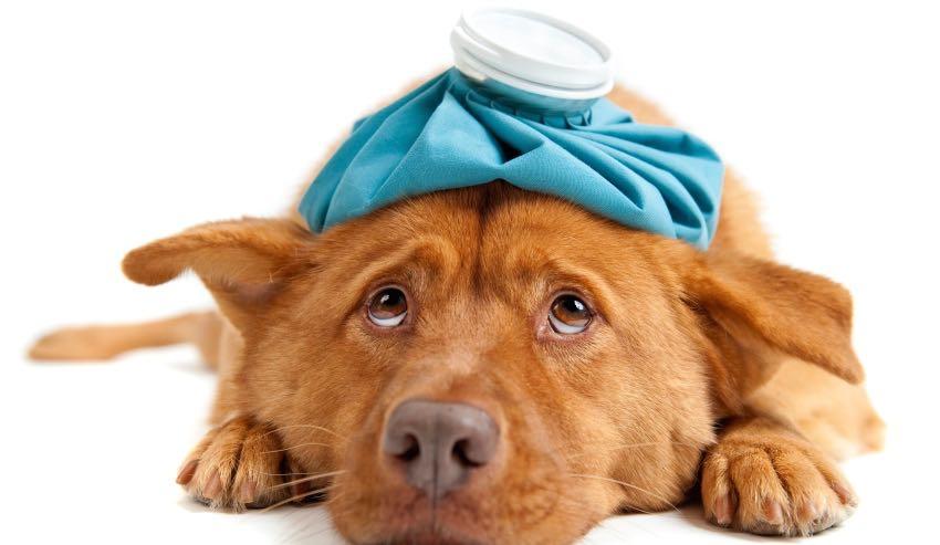 L'omissione di cure al cane malato costituisce reato?