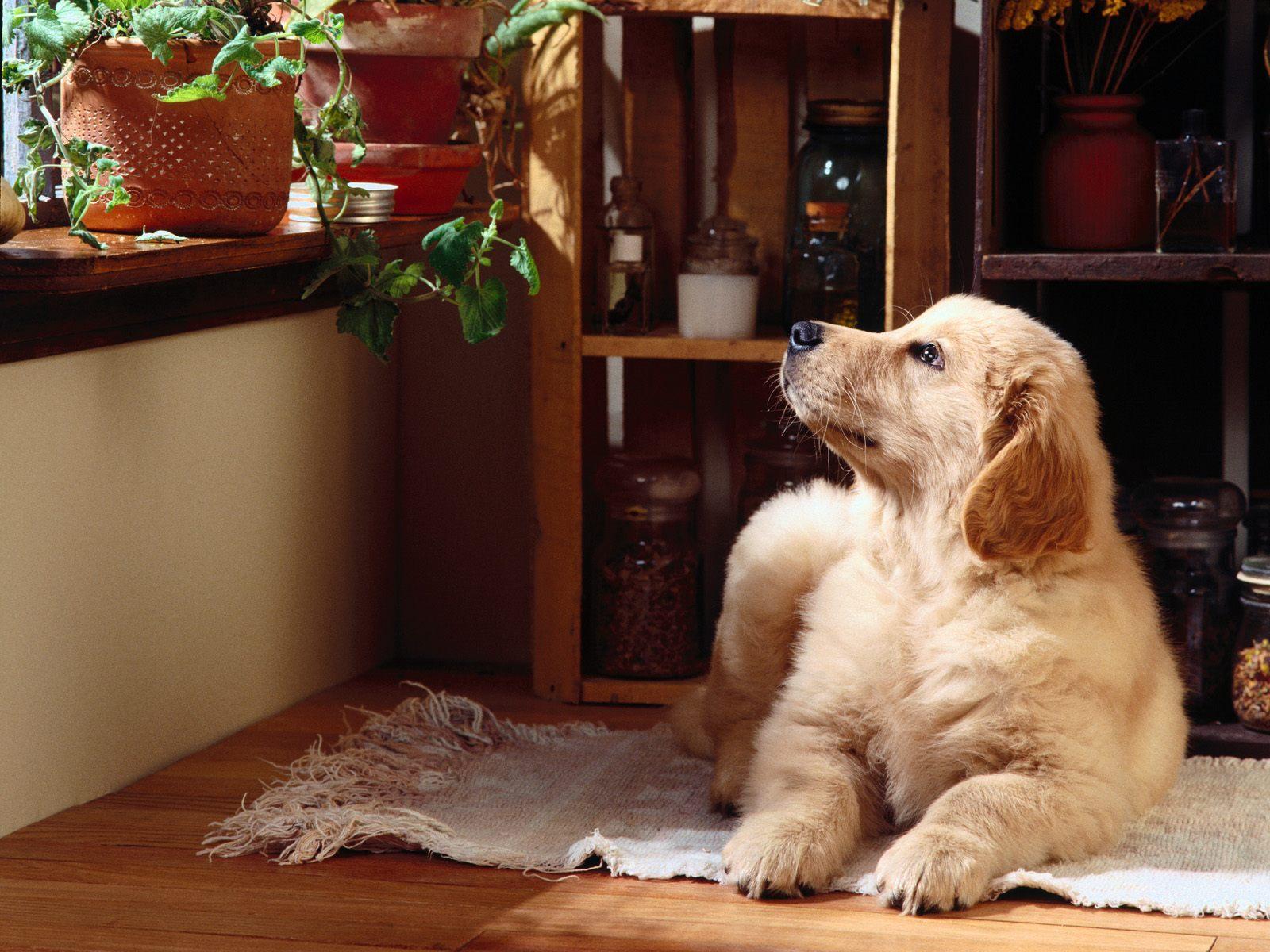 Vita da cani in condominio: detenzione di animali domestici e utilizzo di guinzaglio e museruola