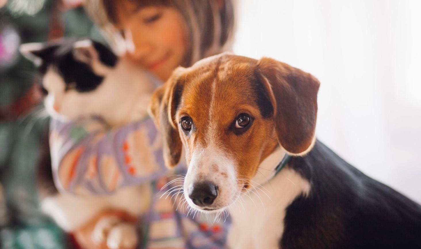 Animali domestici e le parti comuni del condominio