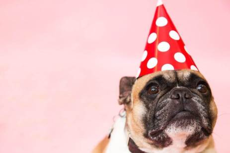 dog in party hat 1