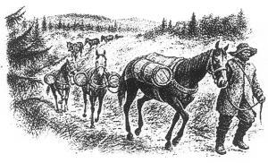 Salztransport mit Packpferden