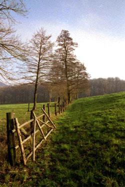 Zaun, Grasweg und Weidbäume im Nordwesten des Gebiets. (Foto: Wiegand, Nov. 02, HM-XXIX-29-10)