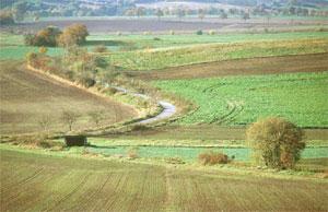 Der Landschaft angepasster Verlauf der alten Straße zwischen Levedagsen und Thüste. (Foto: Wiegand, Okt. 02, HM-XXVI-29)