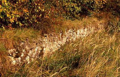 Lesesteinmauer zwischen Waldstück und Wirtschaftsweg (Foto: Wiegand, Okt. 02, HM-XXVI-36)