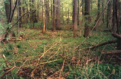 Wölbacker Stegelskamp, die Furchen verlaufen quer zur Blickrichtung, parallel zum Rösebach (Foto: Baum, 1999)
