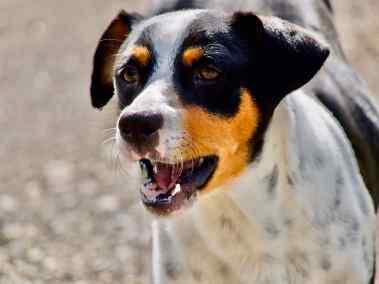 2020-01-30-wachhund-bb