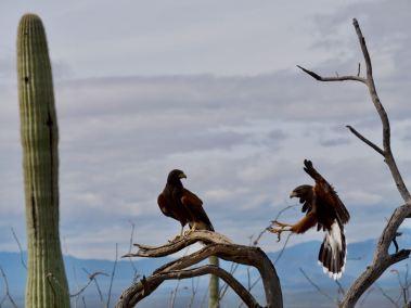 2020-03-12-arizona-sonora-desert-museum-bf