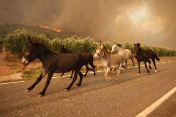 A Prayer For The Wild Of America. Their World Is Burning And They Have Nowhere To Go