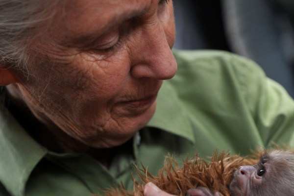 "Jane Goodall ""We Are Stealing Our Children's Future."""