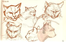 drawings of a cat