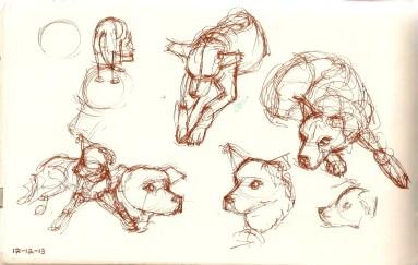 drawings of a labrador retriever