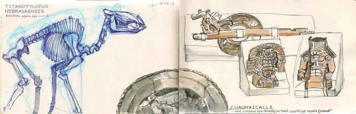 drawings of dinosaur bones and artifacts