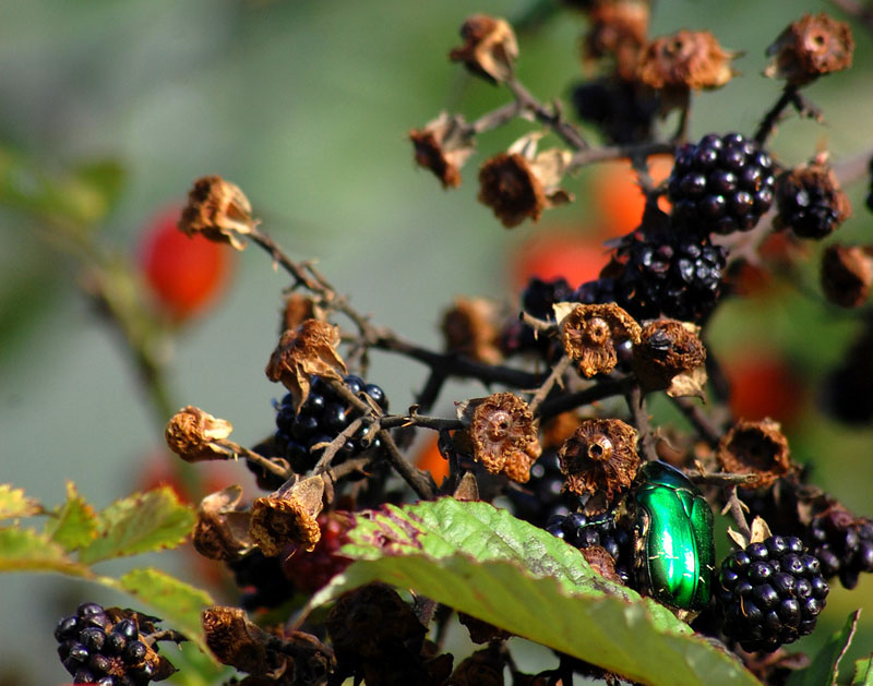 Bramble Jewels