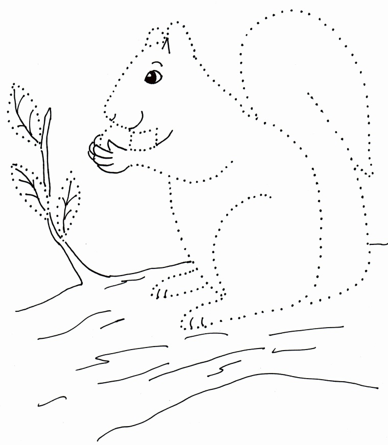 drawing with dots squirrels