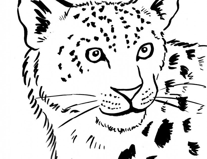 Snow Leopard Coloring Page Art Starts