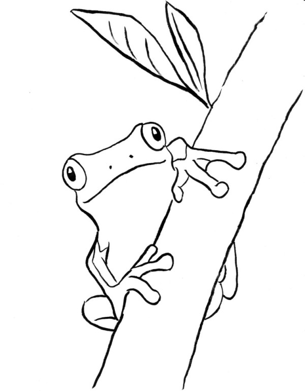 frogs coloring pages # 12