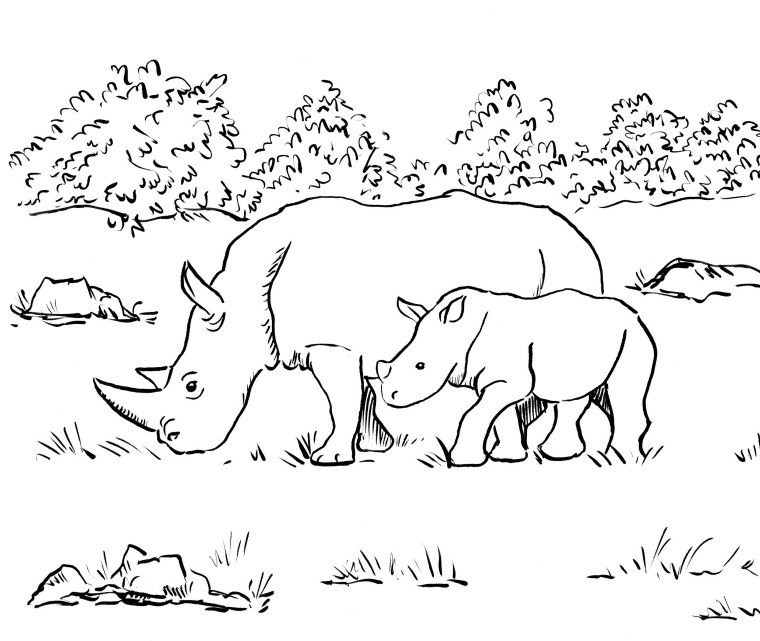 Rhino Coloring Page Art Starts