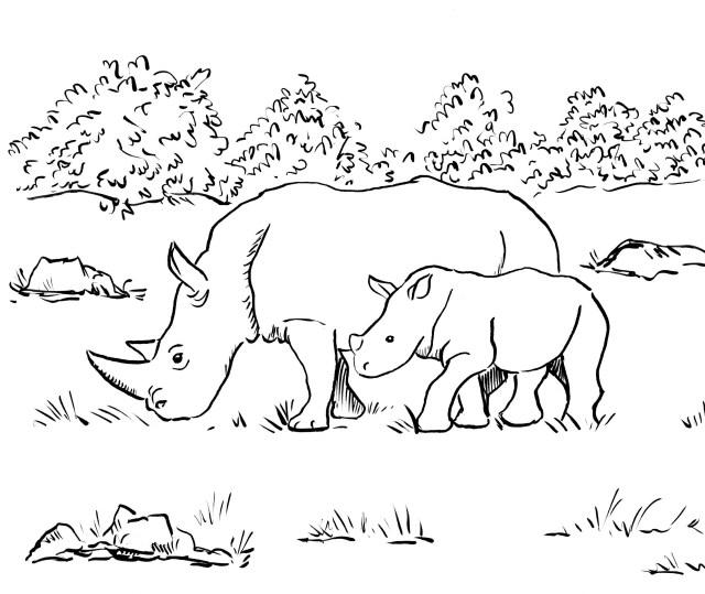 Rhino Coloring Page - Art Starts