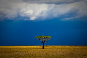 Acacia Tree and Storm, Serengeti National Park, Tanzania, East Africa