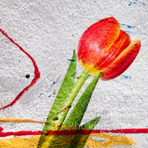 ARTography Graffiti Tulip 2