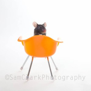 Mouse on Chair