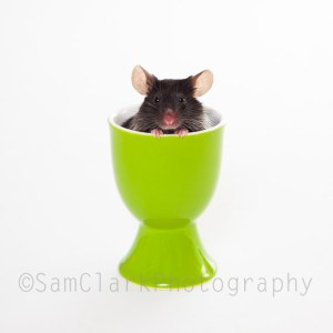 PETOGRAPHY - Mouse in Green Egg Cup
