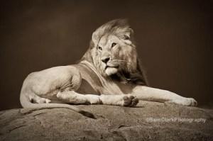 Copyright: Sam Clark Photography