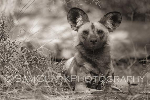 Copyright Sam Clark Photography