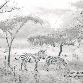 ZMU 2014-02 Uganda
