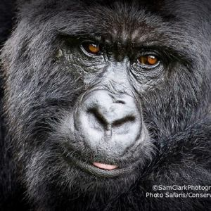 GVR 2009-06 Rwanda