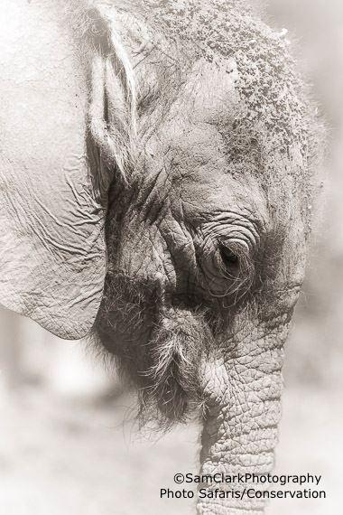 EResK 2015-01 Orphaned Elephant Calf