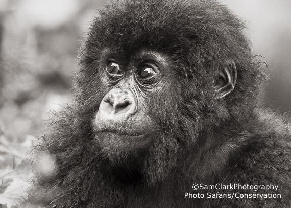 GVR 2009-03 Rwanda