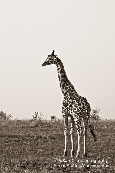GQEU 2014-02 Uganda