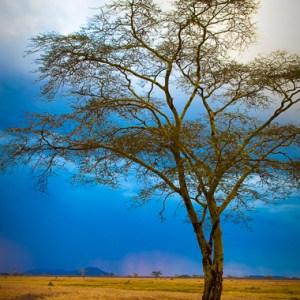 LST 2009-03 Tanzania
