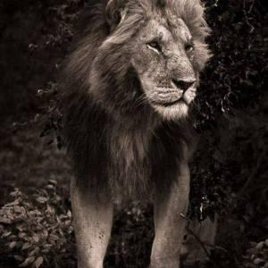 LMMK 2015 Kenya