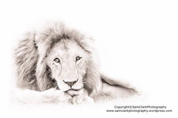 LMMK 2015-02 Kenya