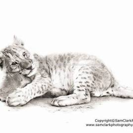 Lion Cub and rock pillow – Number 5/100