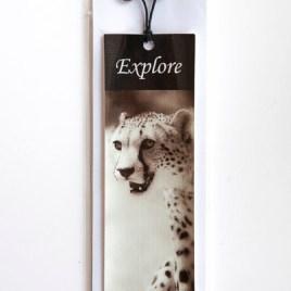 Cheetah – Explore