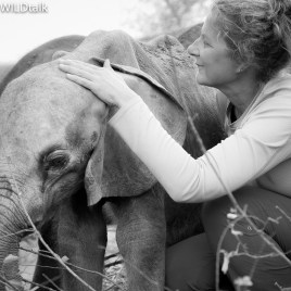 ANIMAL COMMUNICATION for SANCTUARIES