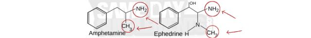ephedra vs amphetamine