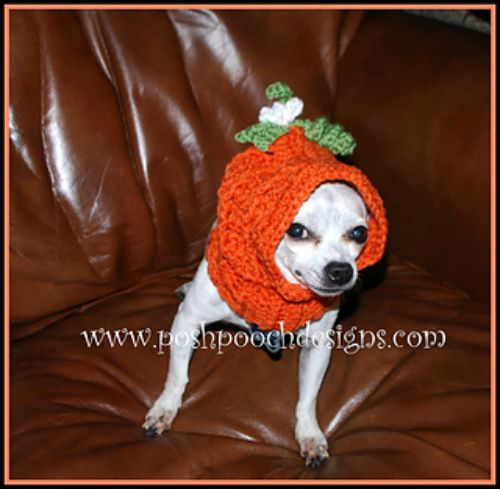 Pumpkin Dog Snood