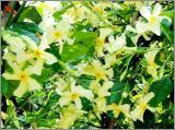 Duftpflanzen Samen