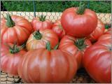 Tomaten Samen